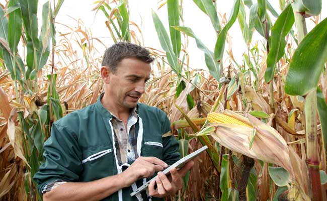 Photo de Agriculture online: le mobile au coeur de la productivité (2/3)