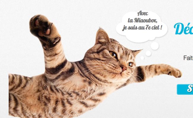 Photo de AnimalBox, les box pour chiens et chats, lève 300 000 euros