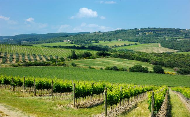 Photo de [FrenchWeb Tour Bordeaux] Un cluster de la filière vitivinicole au coeur des vignes
