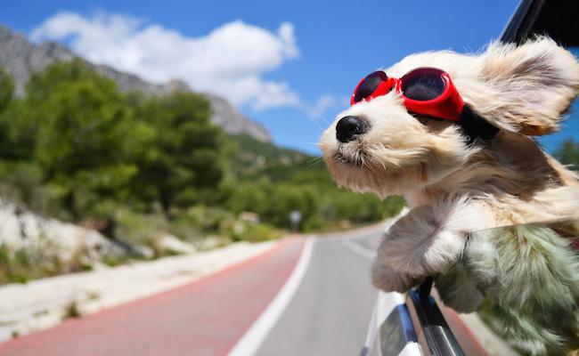 Photo de Rover, 65 millions de dollars pour devenir le «Airbnb des chiens»