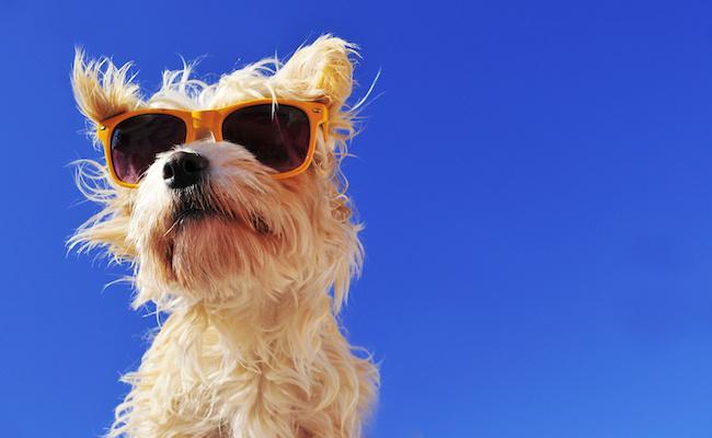 Photo de Exclusif – Box pour animaux : Woufbox fusionne avec DoggyBox .fr et veut s'étendre en Europe