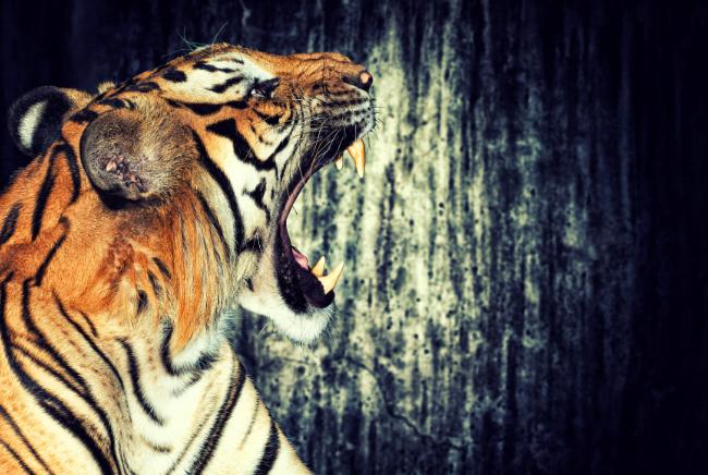 Photo de Tiger Global boucle un nouveau tour de 2,5 milliards de dollars