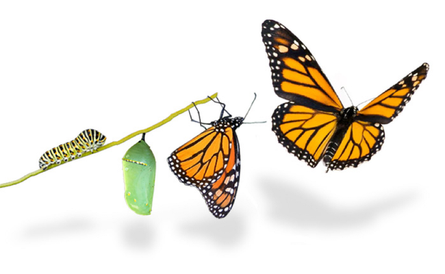 Hub Forum papillon