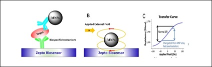 Magnetoresistance-biomarkers-Zepto
