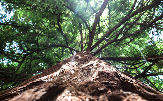 arbre-treee-vc-design