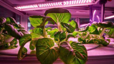 Photo de Balderton Capital injecte 25 millions de dollars dans les fermes verticales urbaines d'Infarm