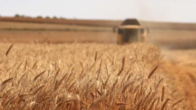 Photo de [FW Radar] API-AGRO, la plateforme de partage, de diffusion de données & services de l'écosystème agricole