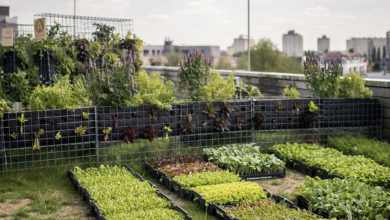 Photo de Peas&Love, 1,2 million d'euros pour installer des potagers urbains dans toute l'Europe