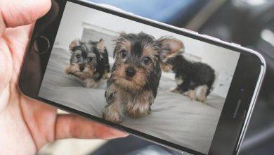 Photo de Face au déclin des ventes de smartphones, l'industrie du mobile veut connecter les animaux