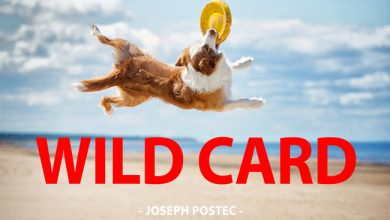 Photo de [WILD CARD] Quelle vie de chien !