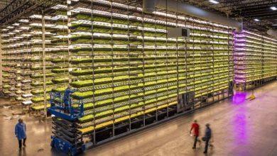 Photo de AgTech : AeroFarms lève 100 millions de dollars pour ses fermes verticales