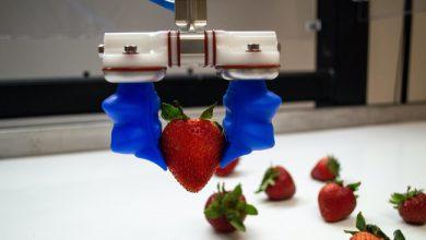 Photo de 23 millions de dollars pour les robots industriels de la startup américaine Soft Robotics