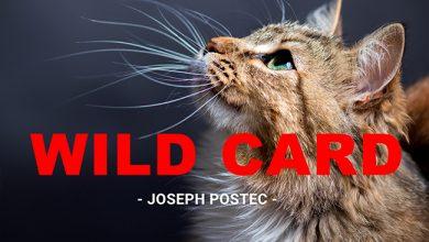 Photo de [WILD CARD] Les chats savent vraiment tout faire !