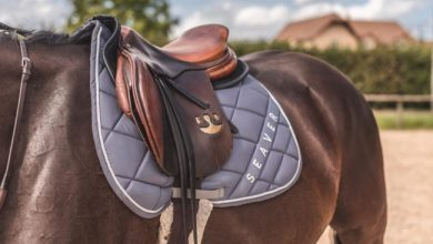 Photo de Équitation: Seaver lève 1,5 million d'euros pour sa sangle connectée