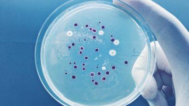 Photo de L'un des plus puissants antibiotiques au monde vient d'être découvert grâce à l'IA