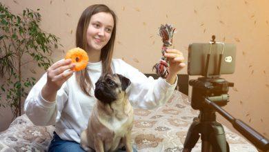 Photo de Des box alimentaires au pet-sitting: comment le marché animalier prospère avec le numérique